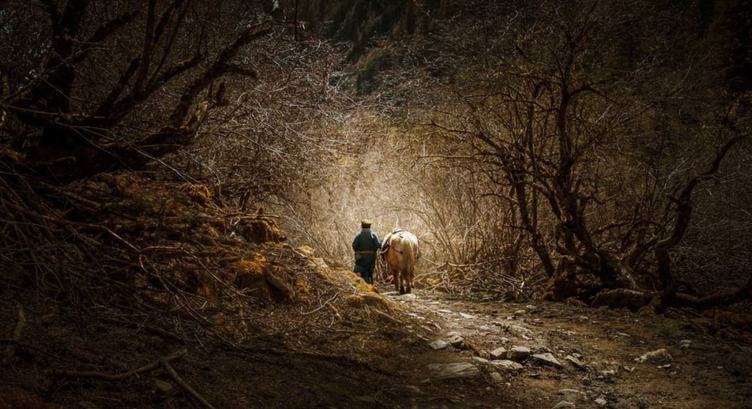 把几何木屋搬到浙江山中 国内首个树蛙部落一开业就爆满 旅游资讯 第20张