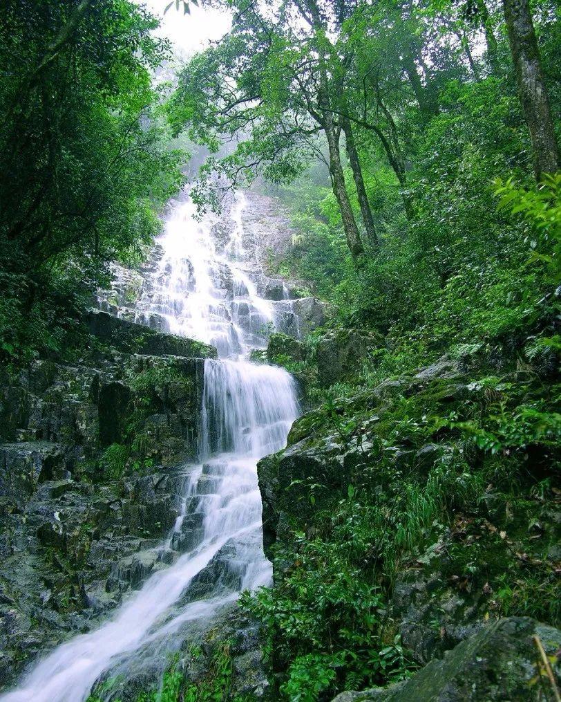 夏日避暑新去处!浙江这几个原始森林 媲美神农架 旅游资讯 第8张