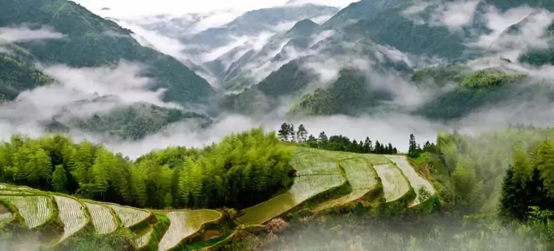 夏日避暑新去处!浙江这几个原始森林 媲美神农架 旅游资讯 第14张