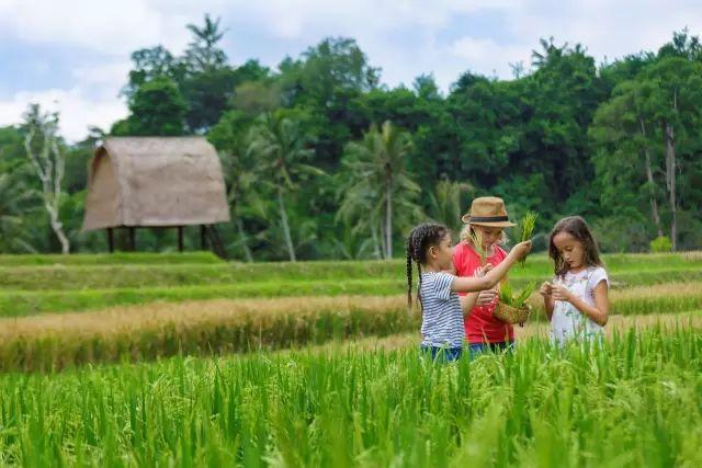 全球仅三家的避世归隐  一家就在巴厘岛乌布! 旅游资讯 第25张