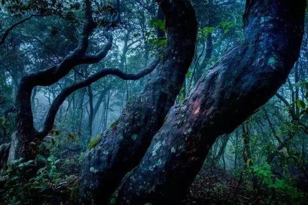 夏日避暑新去处!浙江这几个原始森林 媲美神农架 旅游资讯 第7张