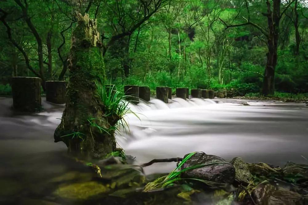 夏日避暑新去处!浙江这几个原始森林 媲美神农架 旅游资讯 第3张