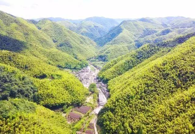 把几何木屋搬到浙江山中 国内首个树蛙部落一开业就爆满 旅游资讯 第5张