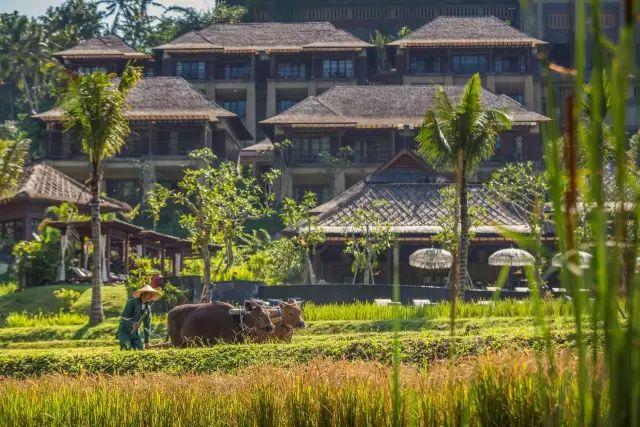 全球仅三家的避世归隐  一家就在巴厘岛乌布! 旅游资讯 第23张