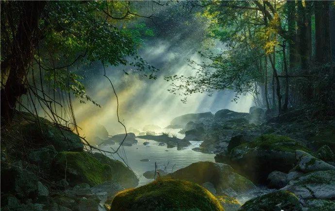 夏日避暑新去处!浙江这几个原始森林 媲美神农架 旅游资讯 第17张