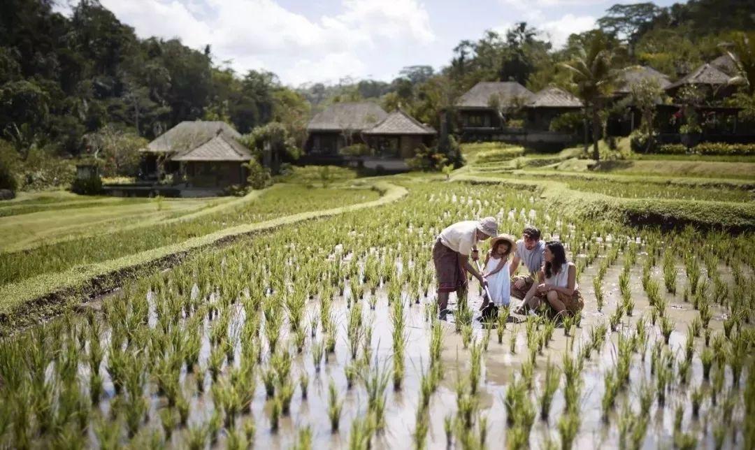 全球仅三家的避世归隐  一家就在巴厘岛乌布! 旅游资讯 第24张