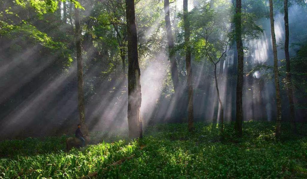 夏日避暑新去处!浙江这几个原始森林 媲美神农架 旅游资讯 第10张