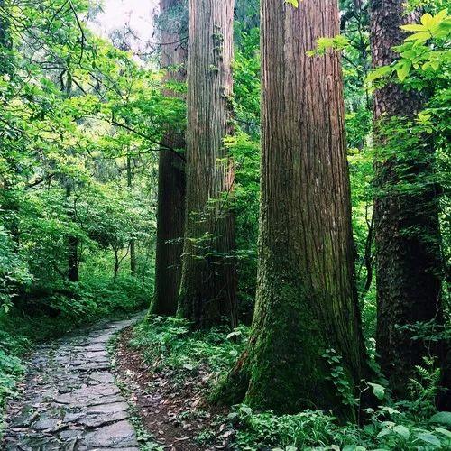夏日避暑新去处!浙江这几个原始森林 媲美神农架