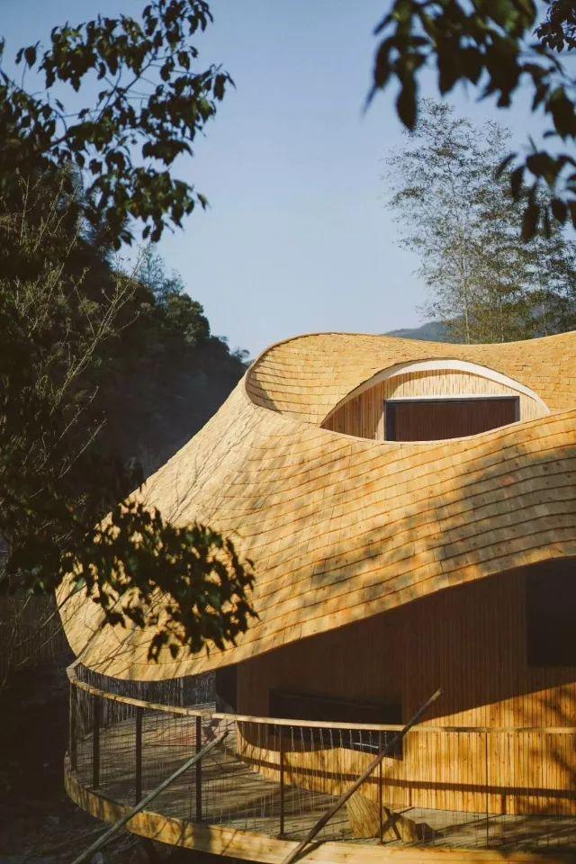 把几何木屋搬到浙江山中 国内首个树蛙部落一开业就爆满 旅游资讯 第7张