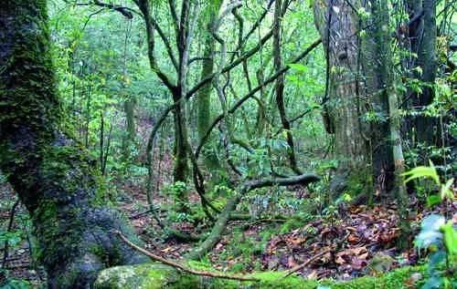 夏日避暑新去处!浙江这几个原始森林 媲美神农架 旅游资讯 第9张