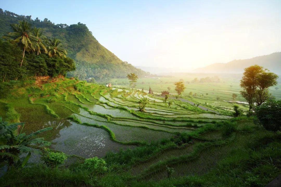 全球仅三家的避世归隐  一家就在巴厘岛乌布! 旅游资讯 第4张