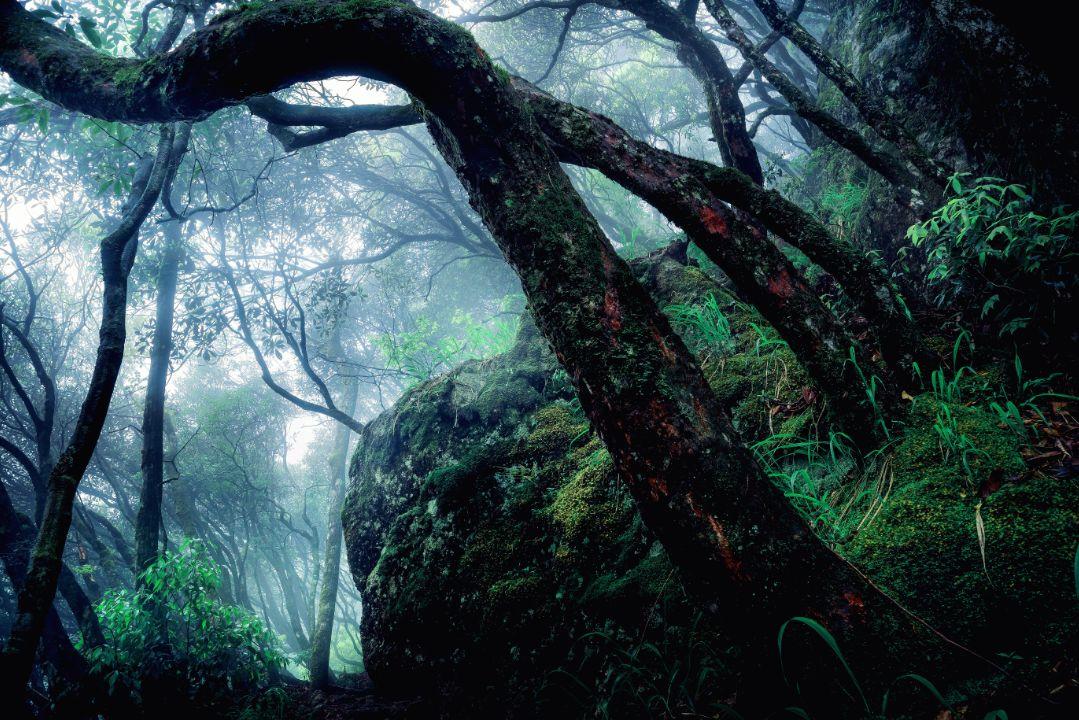 夏日避暑新去处!浙江这几个原始森林 媲美神农架 旅游资讯 第6张