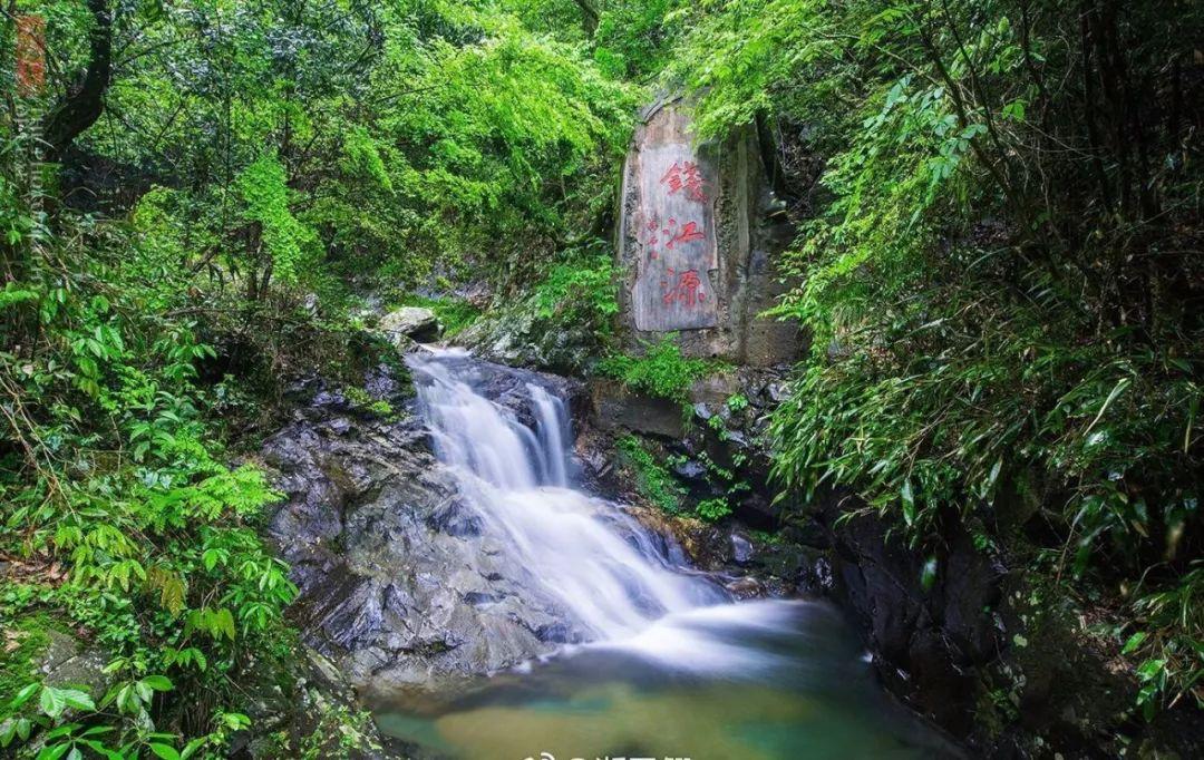 夏日避暑新去处!浙江这几个原始森林 媲美神农架 旅游资讯 第16张