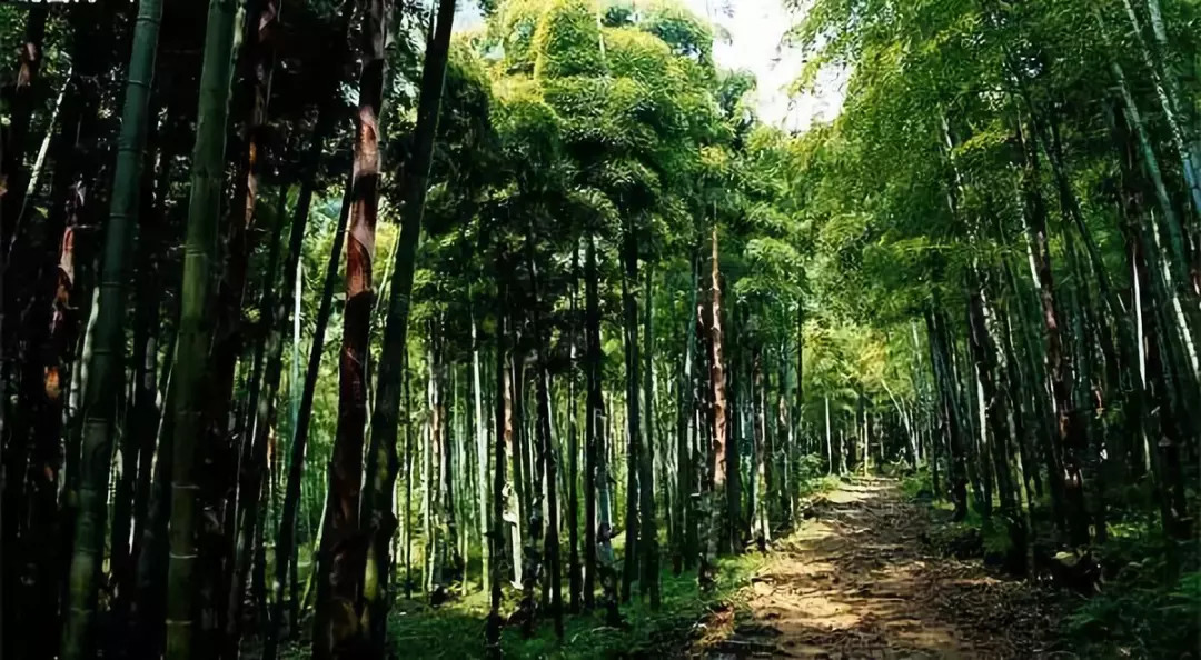 夏日避暑新去处!浙江这几个原始森林 媲美神农架 旅游资讯 第2张