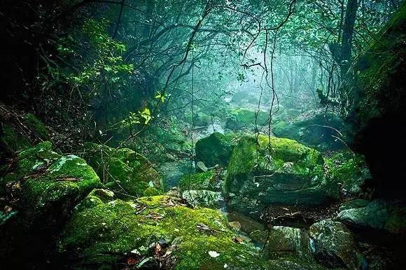 夏日避暑新去处!浙江这几个原始森林 媲美神农架 旅游资讯 第15张